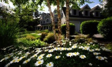 Guiden til den farverige indretning i dit hjem