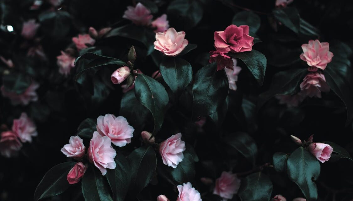 Tips til brugen af farverige blomster i dit hjem